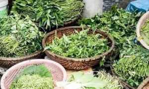 2块钱一斤的排毒菜,好吃又养生